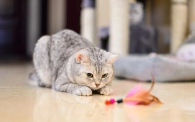 Fun Craft Toys and Treats You Can Sew for Your Cat